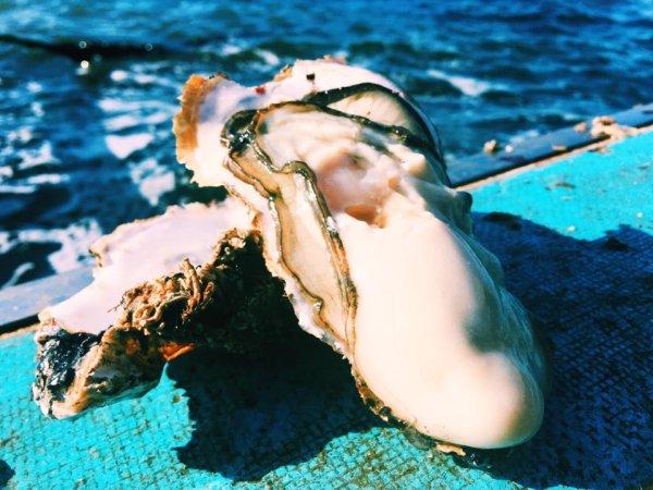 画像1: 日本一の広田湾の殻付き牡蠣 (1)